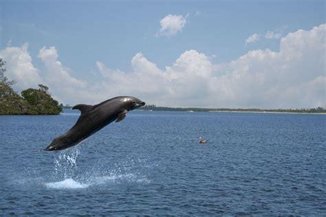 boat rental in naples fl park shore marina naples florida boat rentals 239 434 0724