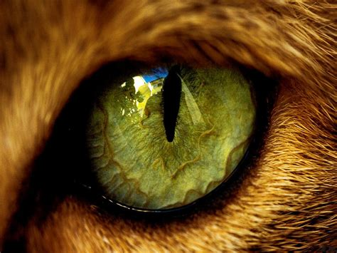 imagenes de ojos wallpapers ojos de animales wallpapers hd im 225 genes taringa