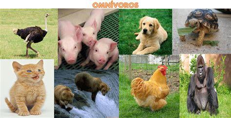 imagenes de animales herbivoros y carnivoros los animales animales omnivoros