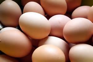 eggsperiment csa eggs vs organic store bought eggs