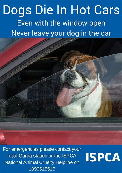 can dogs die from keep pets safe in weather with our summer tipsispca