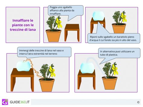 quanto bagnare le orchidee come e quando innaffiare le piante