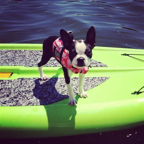 boarding boston 17 best images about sup boards on show best friends and thermostats