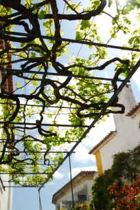 Training Grape Vines Pergola by File Overhead Grapevine Arbor Trellising Jpg Wikipedia