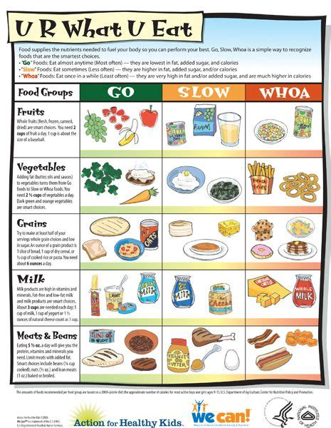 food the best nutrition for your four legged friend books best 25 food pyramid ideas on healthy diet