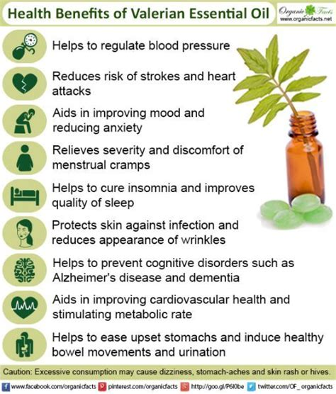 Essential Oils Thc Detox by 1000 Images About Medicinal Plants On