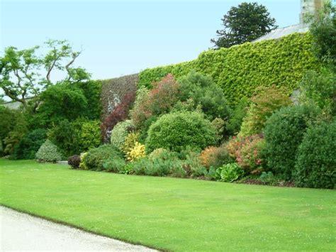 siepi per giardini recinzioni con siepi