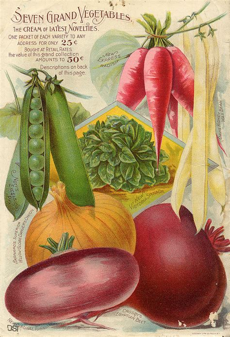 Seed Catalogs From Smithsonian Institution Libraries Vegetable Garden Catalogs