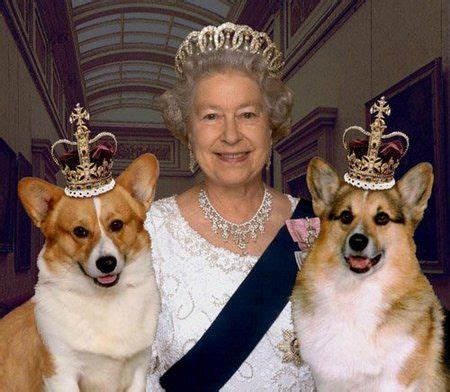 how many corgis does the queen have 1118 best queen elizabeth ii images on pinterest