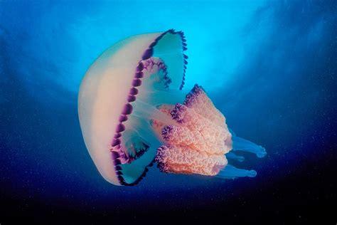 www fotosde pijas rosarinas comentarios imagenes de medusa really pictures to pin on pinterest