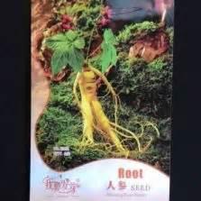 Benih Bibit Herba Stevia jual bibit tanaman herba bibitbunga