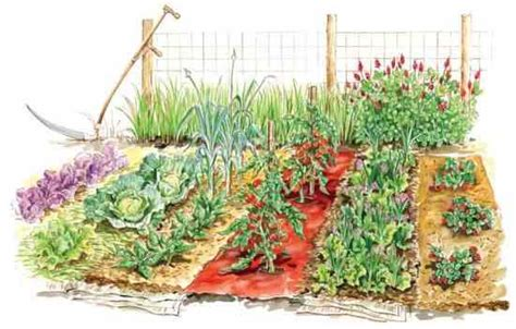 Mulch For Vegetable Gardens Get The Most From Vegetable Garden Mulches Organic