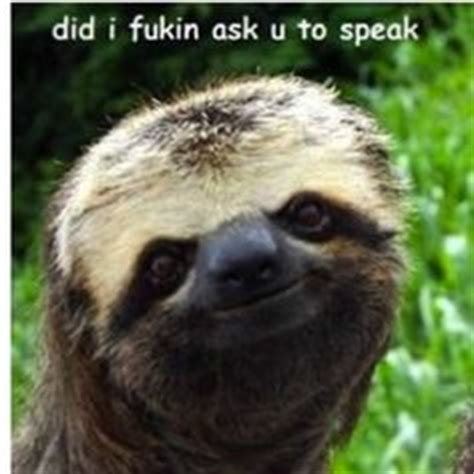 Perverted Sloth Meme - perverted sloths on pinterest funny sloth sloth memes