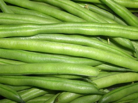 Recolte Haricot Vert by Haricot Vert Phaseolus Vulgaris Semis Plantation