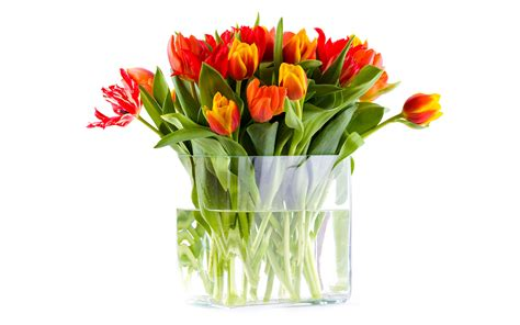 Pictures Of Tulips In Vases by Vase With Tulips Wallpapers And Images Wallpapers