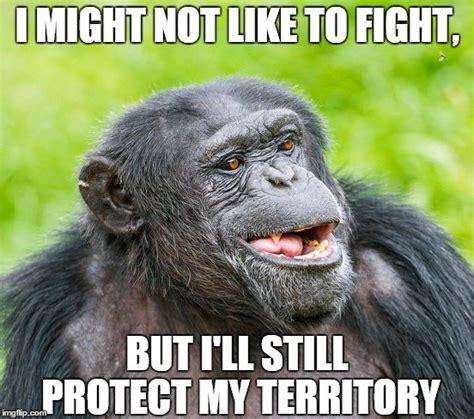 Chimp Meme - chimp funny best image high definition latest
