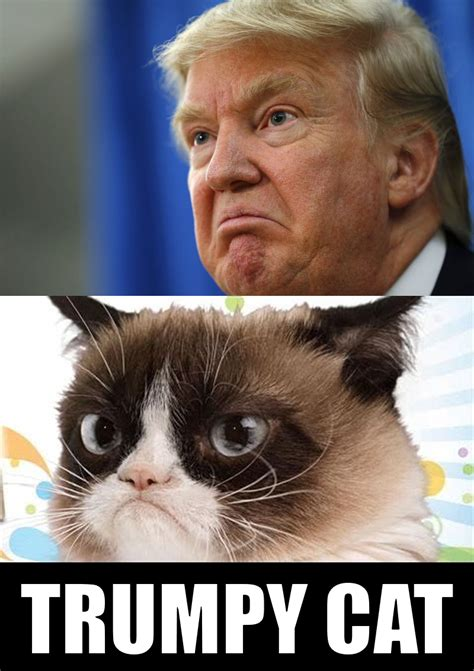 silly pictures trumpy cat pictures and quotes