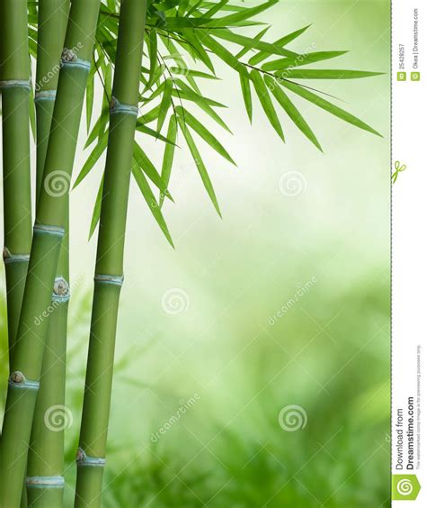Jungle Dreams Wall Mural bamboo tree with leaves royalty free stock photography