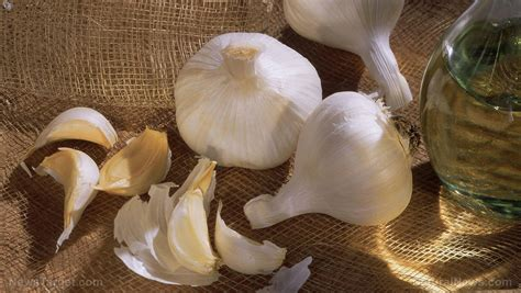 Garlic Detox Thc by Anticancer News Anticancer News Anticancer Information