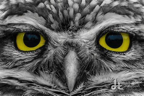black and white owl wallpaper black and white eyes animals yellow eyes owls 1607x1073