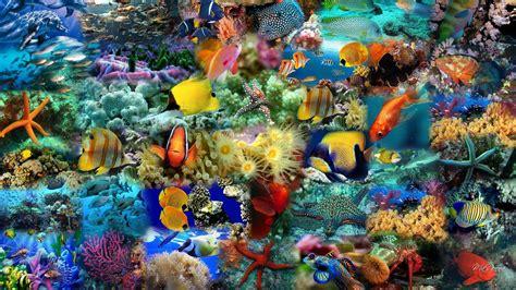 colorful wallpaper animal colorful fish wallpaper