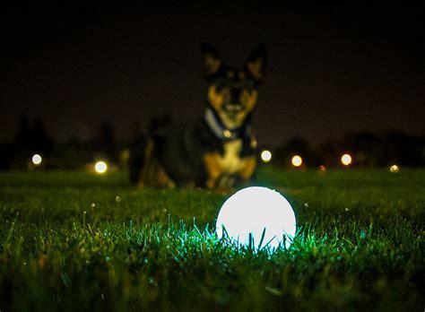 Glow Max chuckit max glow selvlysende bolde