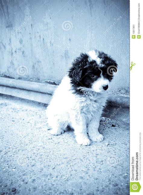 abandoned puppy abandoned puppy stock image image 13017851
