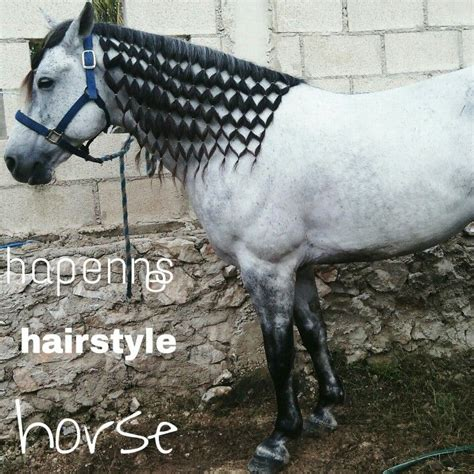hairstyles for horses 17 best images about horse hairstyles on pinterest