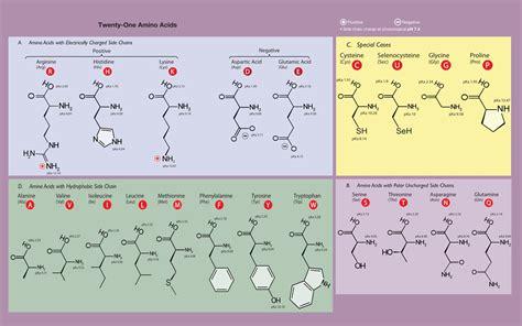 amino acids nicoptere