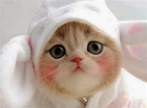 wallpaper anak kucing imut foto kucing persia lucu dan imut hot girls wallpaper