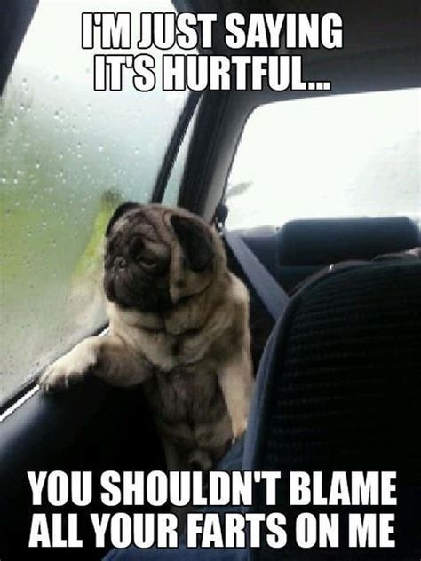 Funny Fart Memes - blame your farts on me funny pictures quotes memes jokes