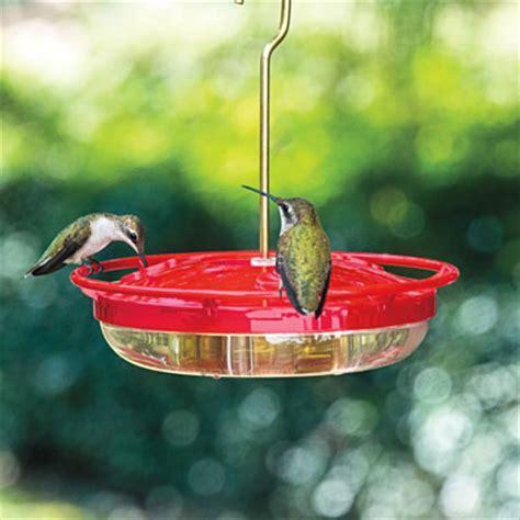 mini high perch hummingbird feeder at spring hill nurseries