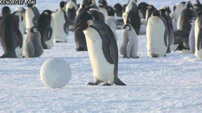 penguin penguins gif  gifer  sirathis