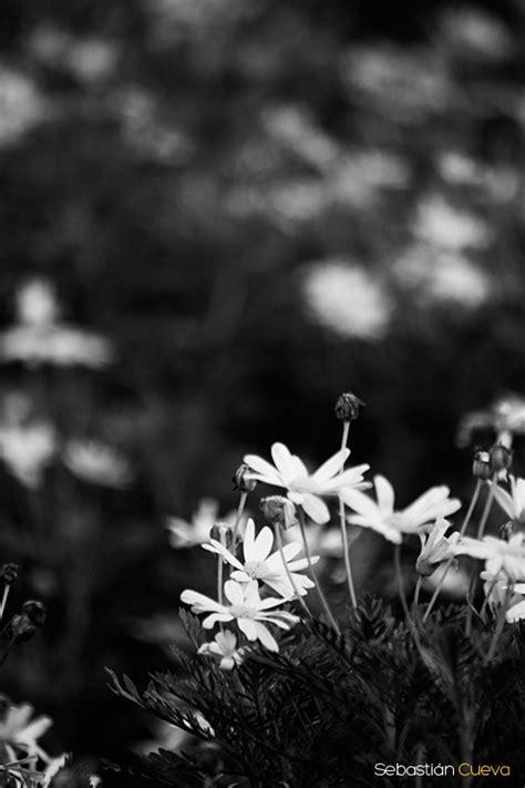 imagenes bacanas a blanco y negro fotos de naturaleza en blanco y negro blog de fotograf 237 a