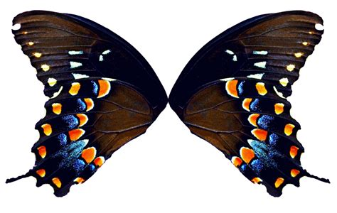 butterfly pattern png butterfly wings natural by fairyfindings on deviantart