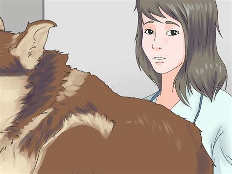 acid reflux in dogs 3 ways to treat acid reflux in dogs wikihow
