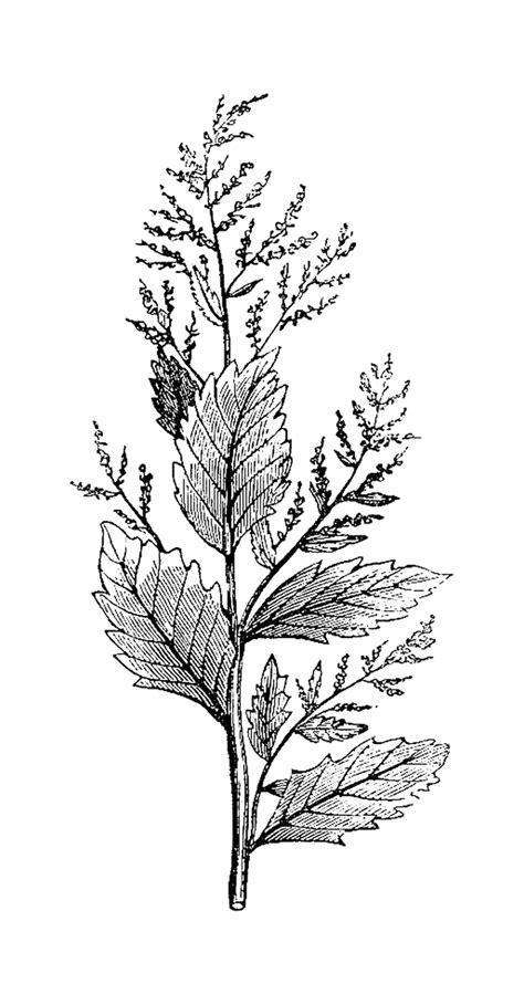 The B Club Leaf Print Black botanical flower drawings black and white