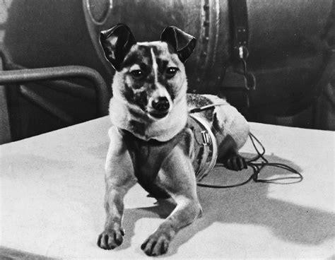 sacrifice  humanity yrs  heroic death  pioneering soviet space dog laika rt world