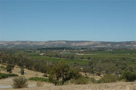panoramio photo of vineyards mclaren vale south australia