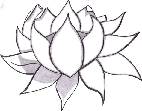 easy flower drawing in pencil clipart best