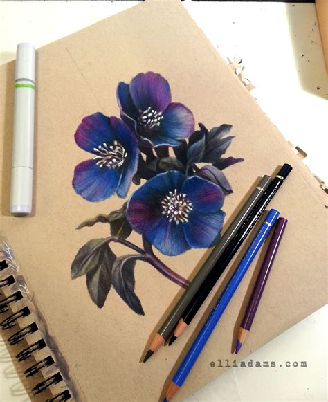 copic colored pencils black hellebore and crescent moon on toned paper with