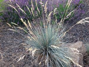 ornamental grasses update your curb appeal with just one plant gardens deer and 4 in
