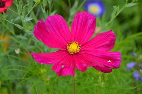 colore fiori immagini fiore petalo estate colore botanica
