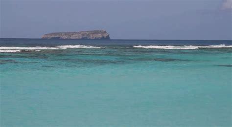 isla de mona de puerto rico florafauna datos amon 225 una mirada nativa a isla de mona mi puerto rico verde