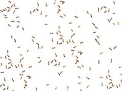 how to get rid of d in bedroom sugar ants in bedroom memsaheb net