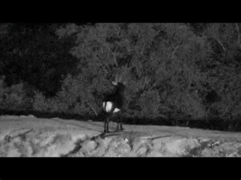 wildearth djuma waterhole sable antelope 1 24 2016 youtube