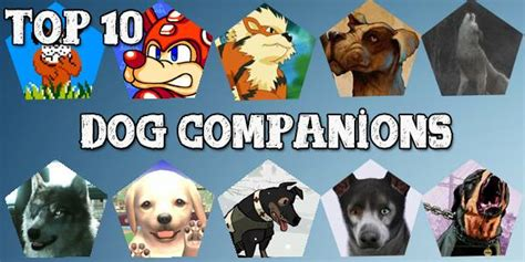 best companion dogs top tens best companion dogs in gamingboulevard