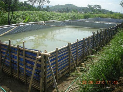 Bibit Lele Batam 1 kolam terpal plastik