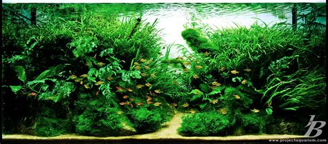 how to aquascape a planted tank planted aquarium tank gallery quot 3rd rock genesis quot project aquarium