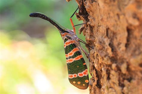 bug tree unlimited lanternflies insect stock image image of small lantern